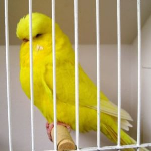 Product categories Parakeets For Sale - Feathers N Friends